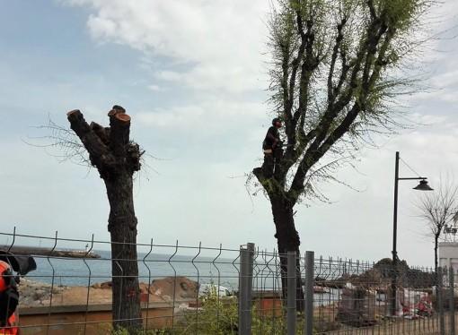 Es consuma la tala dels arbres