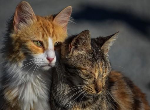 La nova ordenança municipal d'animals es queda a mitges